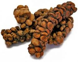 luwak-pooh-expensive coffee