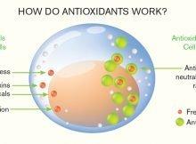how do antioxidants work